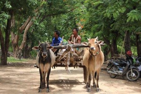 Charette à boeufs campagne birmane